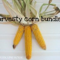 Harvesty Corn Bundles