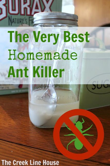 The very best DIY natural ant killer recipe that you can make with ingredients you already have at home! This stuff really works!