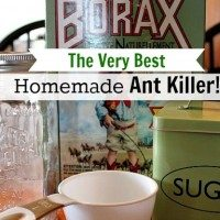 The Very Best Homemade DIY Ant Killer