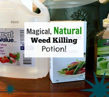 Magical, Natural, Weed Killing Potion