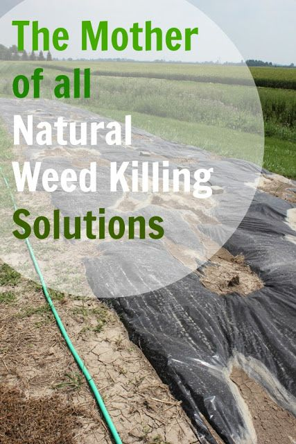 The mother of all natural weed killing solutions the creek line house - Fight weeds with organic solutions practical tips in the garden ...