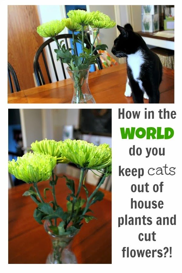how to keep cats out of house plants and cut flowers the creek line house. Black Bedroom Furniture Sets. Home Design Ideas