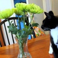 How to Keep Cats Out of House Plants and Cut Flowers