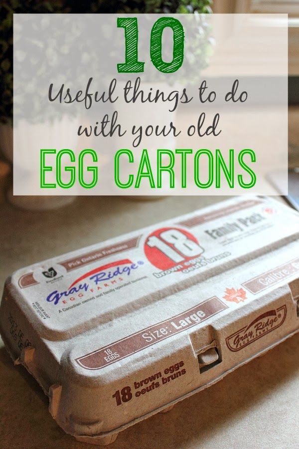 10 useful things to do with your old egg cartons the