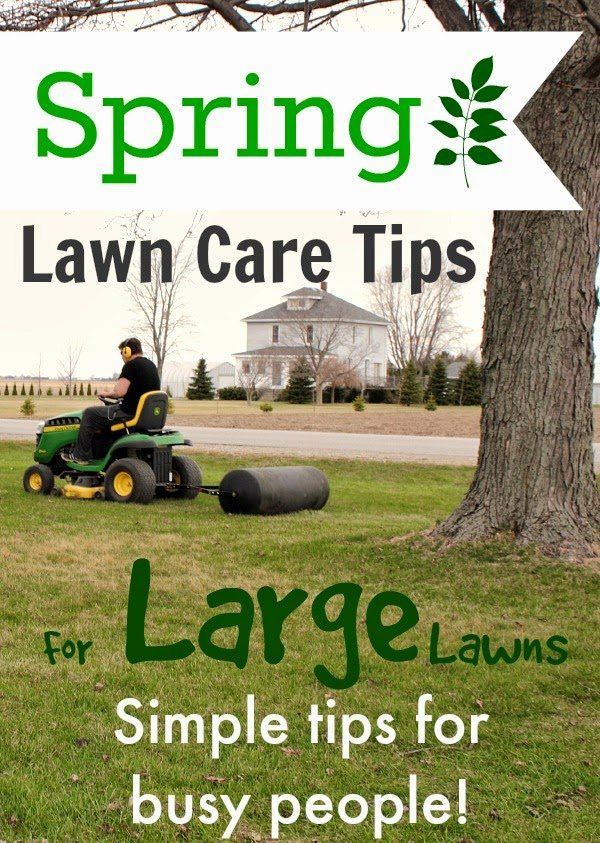 spring lawn care tips for large lawns  the creek line house, Natural flower