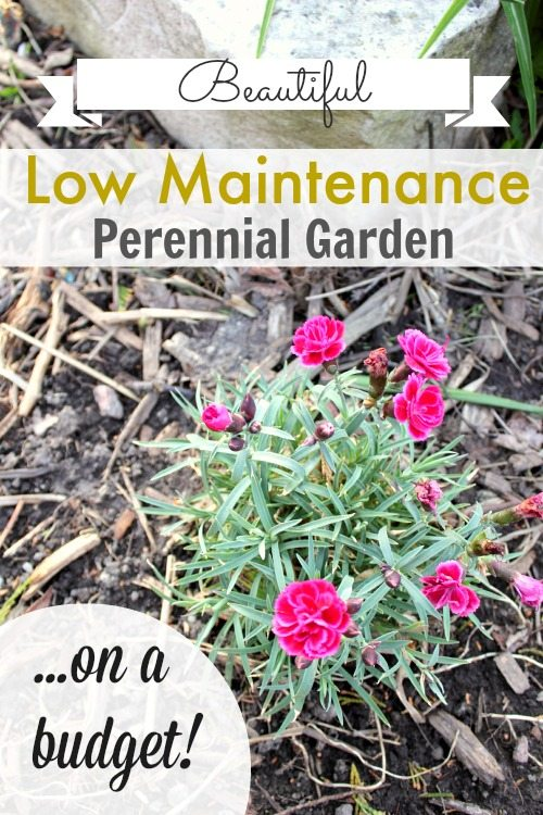 Low maintenance perennial garden on a budget the creek for Low maintenance full sun flowers