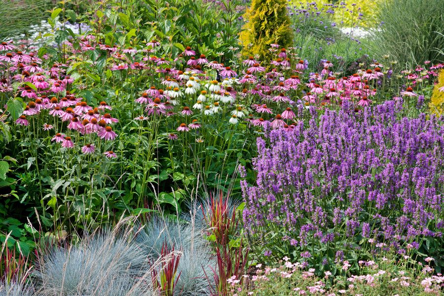 Low maintenance perennial garden on a budget the creek for Low maintenance winter plants