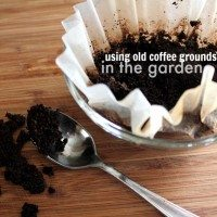 5 Fun Ways to Use Coffee Grounds in the Garden