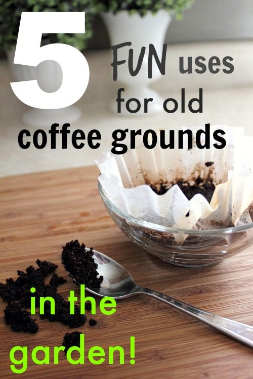 5 fun ways to use coffee grounds in the garden the creek line house for How to use coffee grounds in garden