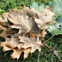 10 Fall Leaf Crafts (Inspiration Fridays)