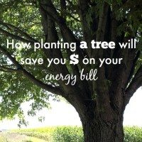Plant trees for energy savings! (Ten Second Tips)