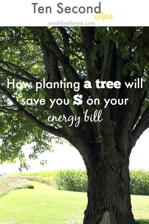 Planting a tree can save you real money on your energy bill! Look for fast-growing varieties!