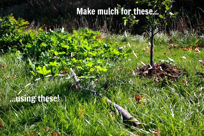 Fall Mulching - Protect Your Plants