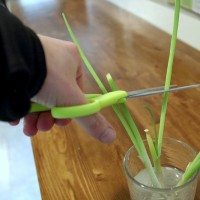 How to Re-Grow Green Onions from the Grocery Store!