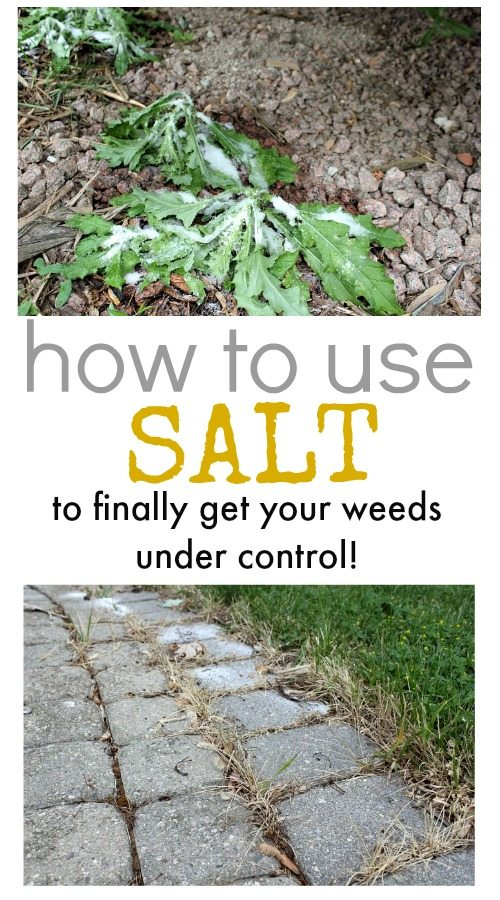 How To Use Salt To Control Weeds The Creek Line House