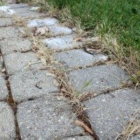 How to Use Salt to Kill Weeds