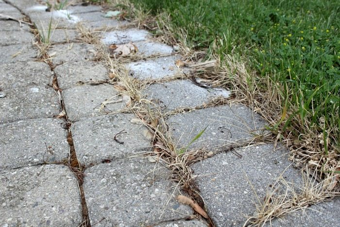 Did you know you can effectively use salt to kill weeds? These tips will help you do it properly and with amazing results!