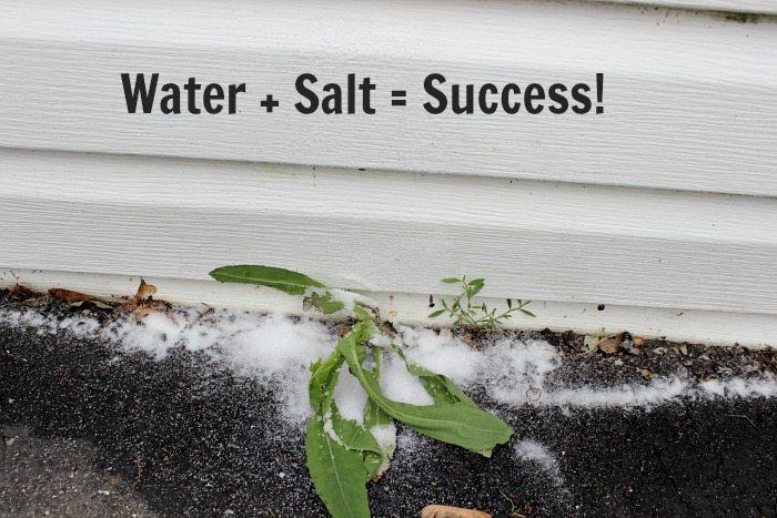Salt + Water = Success