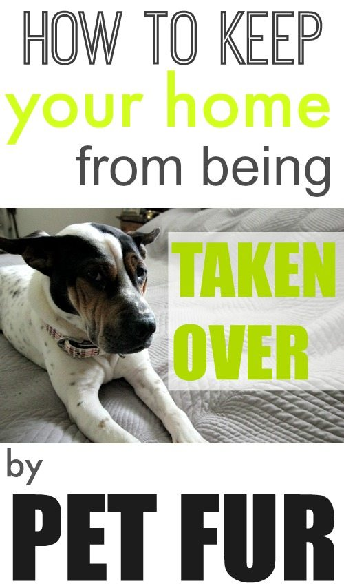 Attention all animal lovers! We know you'll never get tired of the cute, cuddly companionship of your pets but you could definitely do without the mess of fur throughout your home. We have the solution: our guide to keep your home from being taken over by pet fur.