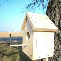 DIY Classic Backyard Birdhouse (Free Printable Plans)