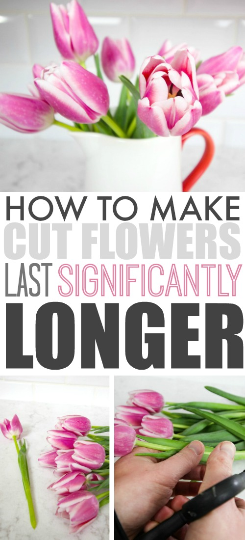 How to make cut flowers from the store or from your garden last much longer! Great tips to follow!