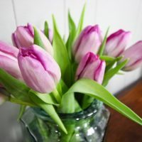 The Tulip Vodka Trick – Prevent Drooping Flowers