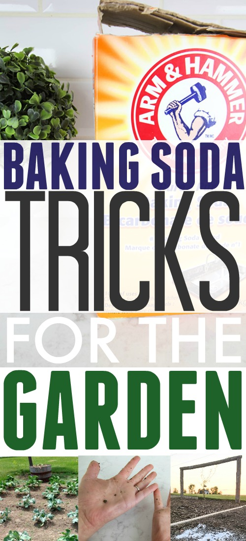 Baking soda has endless uses inside your home but did you know it's just as amazing and versatile outside?  Check out these clever uses for baking soda in the garden!