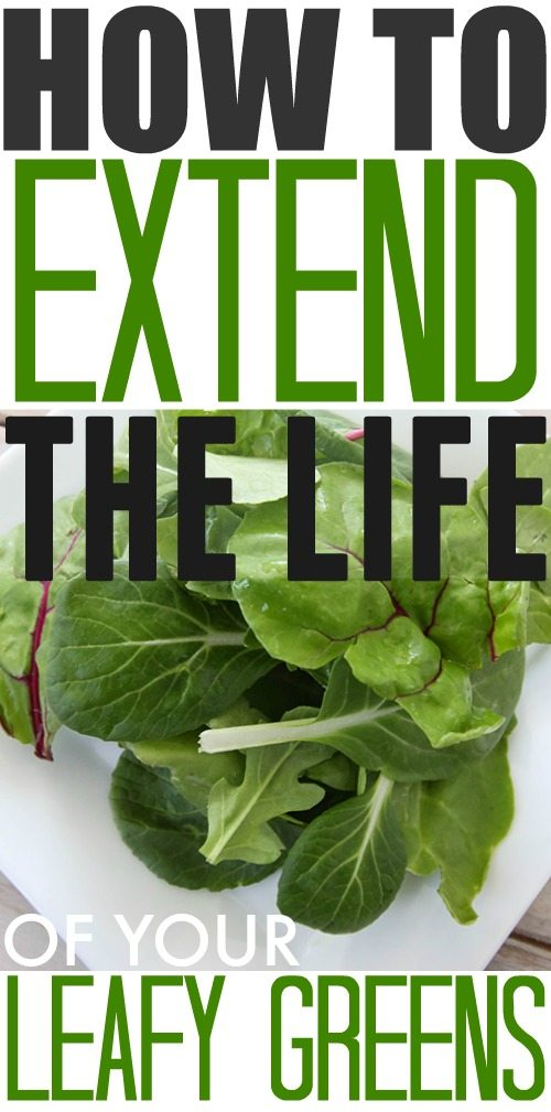 How to extend the life of your leafy salad greens!