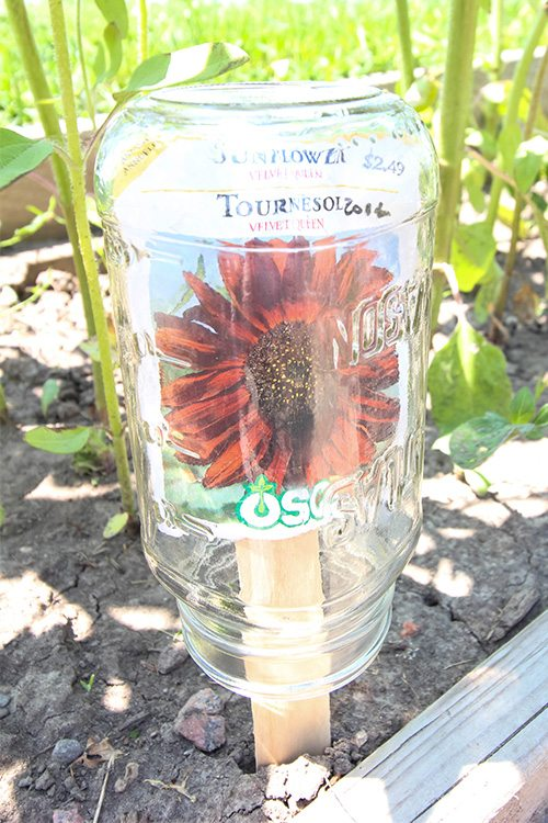 These simple mason jar garden markers are so clever! I love that they allow you to have all your planting info right in the garden!