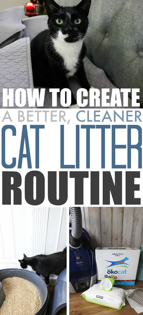 Tips for creating a better cat litter routine that keeps smells and messes at bay and doesn't drive you crazy!