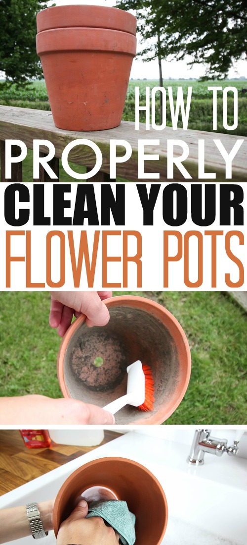 Starting with clean flower pots is very important when planting a potted garden.  Here's the best way to clean your flower pots this growing season.