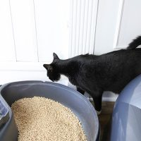 Tips for Creating a Better Cat Litter Cleaning Routine