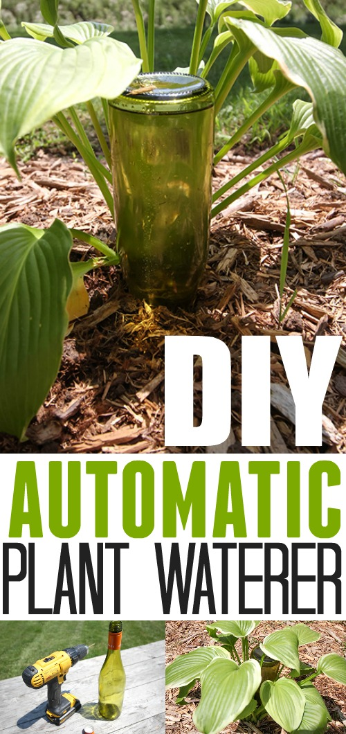 How to make your own automatic plant waterer to keep your plants happy while you're away!