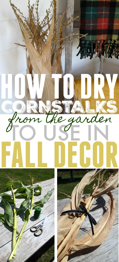 Create your own amazing fall decor with these perfectly dried corn stalks. Here's how to make this classic fall decoration yourself.