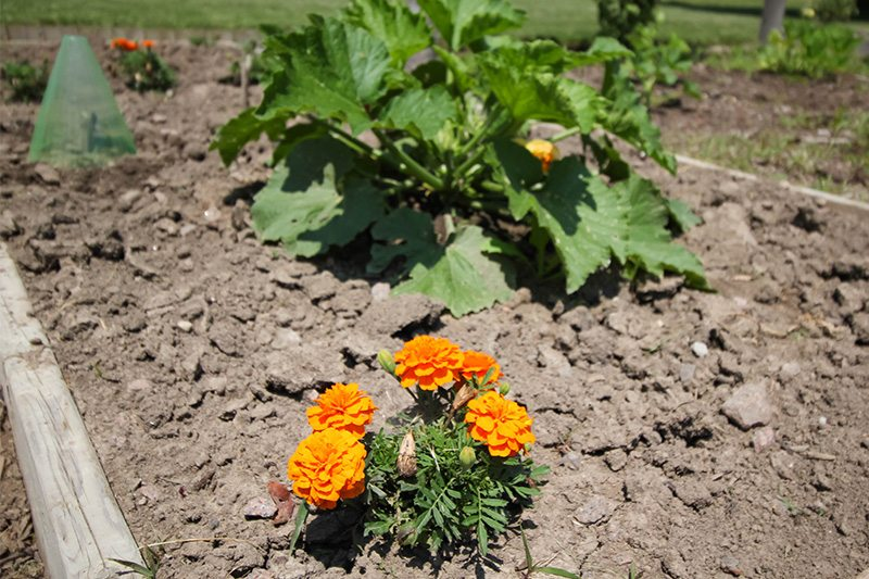 Great growing conditions make for a bountiful harvest but they also help the weeds grow. Here's how to get yourself out of an overgrown garden situation.