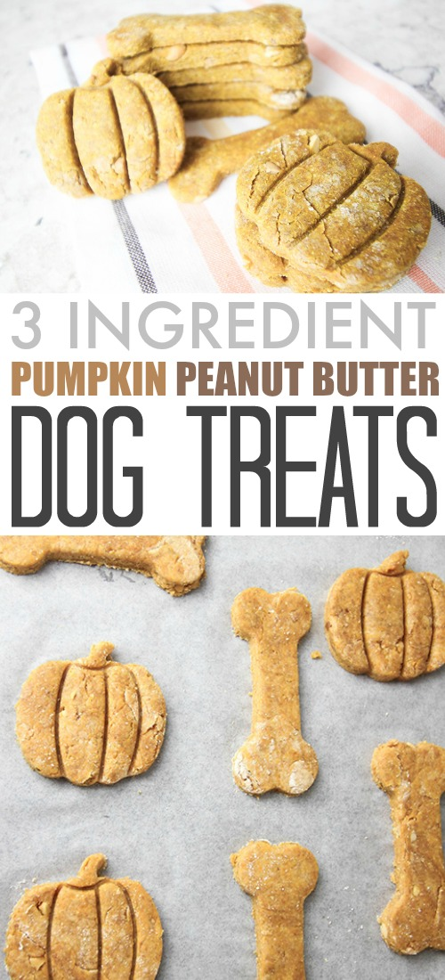 These pumpkin peanut butter, 3 ingredient dog treats are a fun, healthy way to show your furry friends how much you care! Make your own quickly and easily.