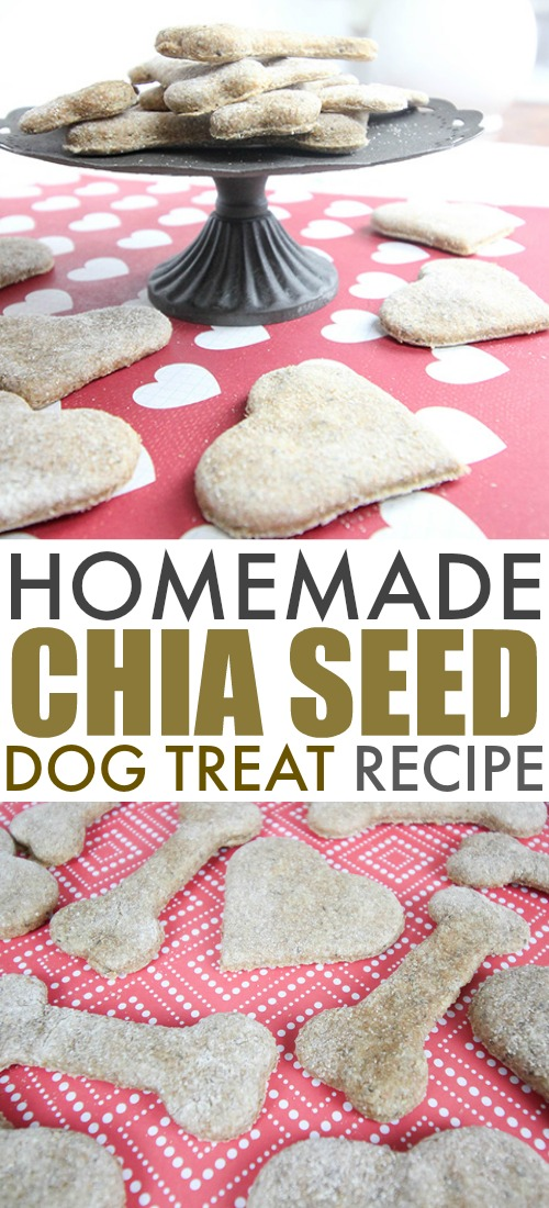 Try these chia seed dog treats if you want to make something special for your dog that's healthy as well!