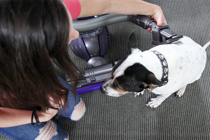 Here are my tips for how to groom your pets with your vacuum cleaner! Once you get your pets used to it, it's such a quick and tidy way to keep your pet's coat under control!