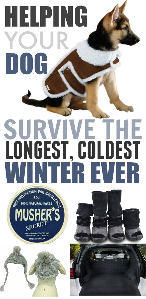 Does your dog enjoy winter or does he run right back inside and curl up on the couch as soon as the weather gets cold? Here are some supplies that will help keep your dog toasty warm so he can get back outside during the colder months!