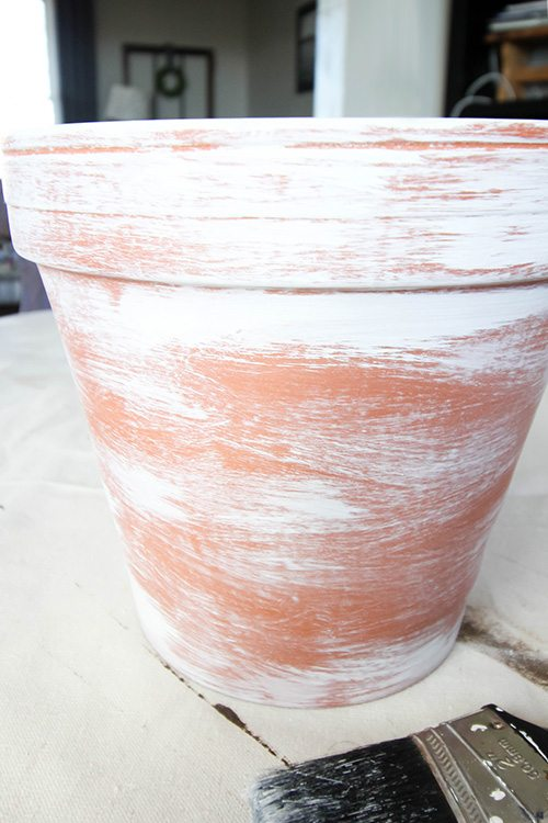 How to Age Terra Cotta Pots - First Step