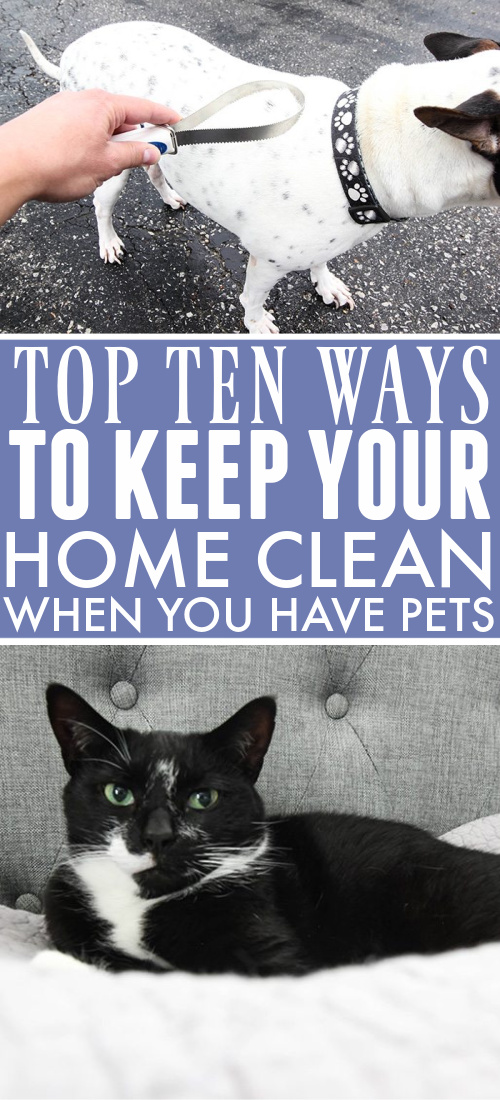 Pets make great companions but they sure leave quite the mess (and stink)!   Be a pet-loving home without looking and smelling like one with our top ten ways to keep your house clean when you have pets.