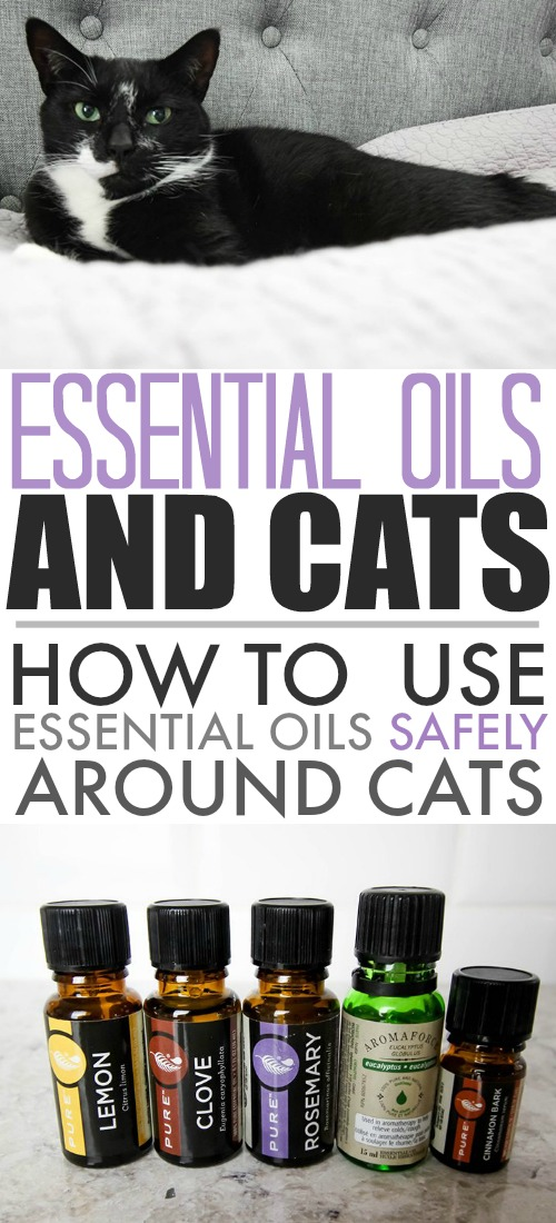 Essential oils and cats are sometimes not the best combo. In fact, while some essential oils are great for dogs, they've been shown to be highly toxic to cats in some circumstances. Here are some safe ways for you to still enjoy using essential oils at home without harming your furry friends.
