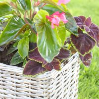 Using Baskets as Planters