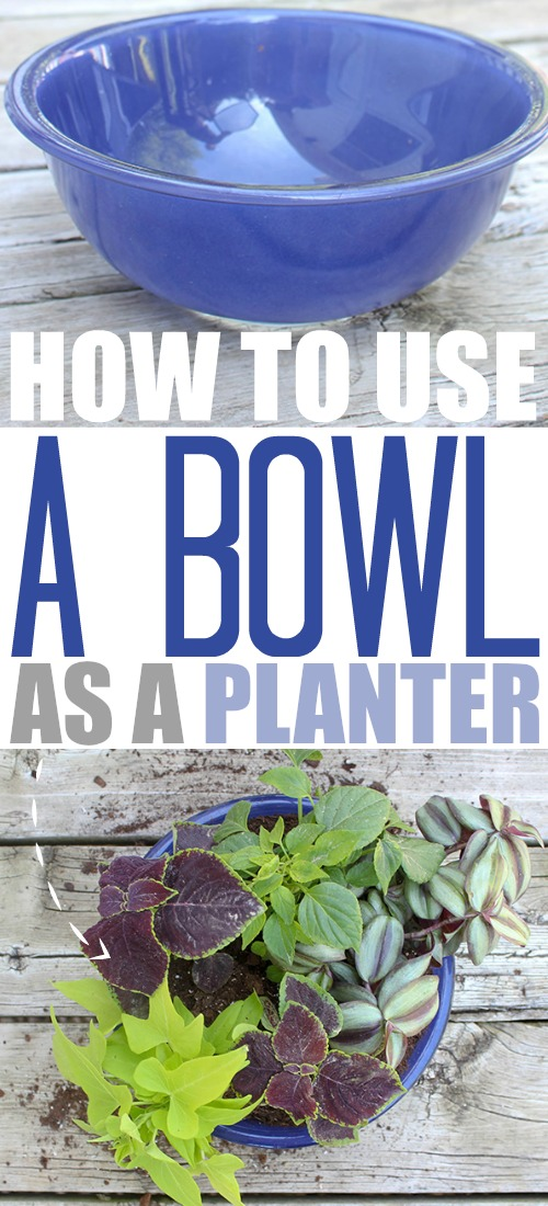 You can use just about any container or vessel you can think of to make a beautiful and unique planter, and bowls filled with beautiful blooms are always some of my favourites. Read on to find out how to use a bowl as a planter!