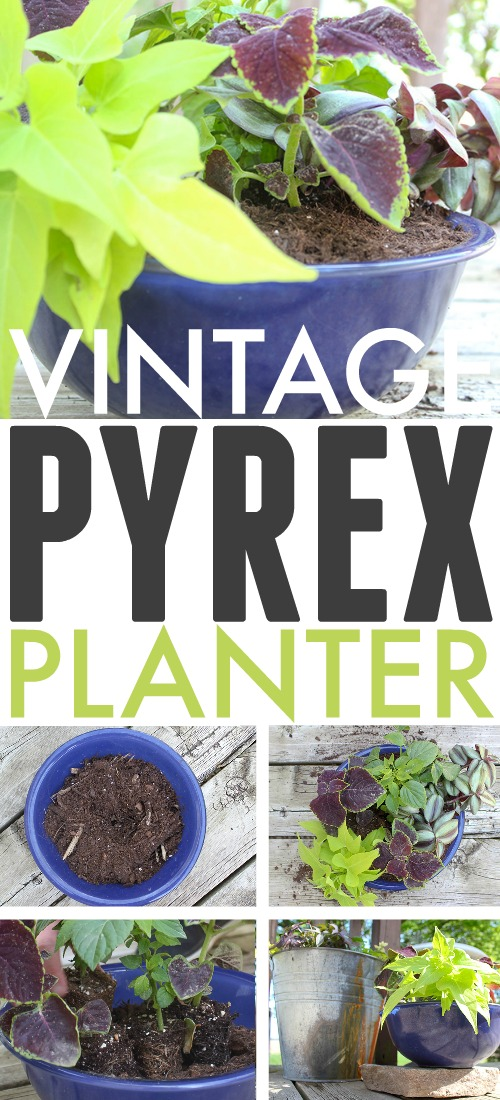 You can use just about container or vessel you can think of to make a beautiful and unique planter, and bowls filled with beautiful blooms are always some of my favourites. Read on to find out how to use a bowl as a planter!