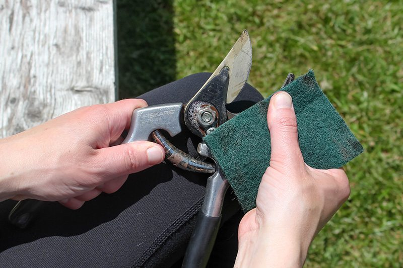The pruning shears that you use in the garden can get dirty really quickly from all kinds of horticultural gunk building up on them. Read on to find out how to clean pruning shears so you can keep yours in tip-top shape!