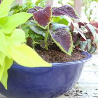 How to Use a Bowl as a Planter