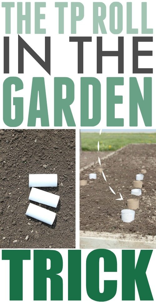 This clever trick for using a toilet paper roll in the garden will be so helpful during planting season this year! If you ever find yourself wondering which plants sprouting up are weeds, and which are the seeds that you planted, this will be a big help!