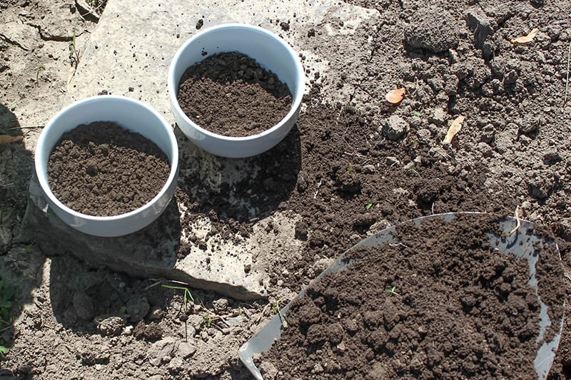 Try this fun method to test soil pH levels in your garden! It can be done in a few minutes at home and requires no special equipment at all.
