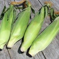 How to Grow Sweet Corn